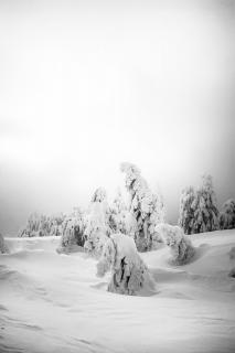 Schneegeister