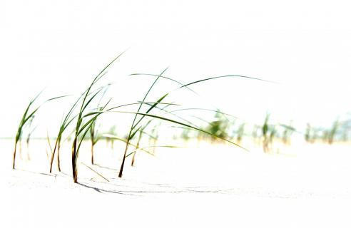 Strandgras am Stand von Norderney