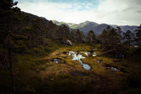 Sumpf in Norwegen