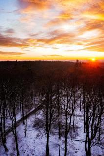 Sonnenaufgang über den Bäumen