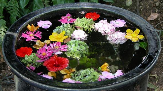 Blumen Blüten im Wasser