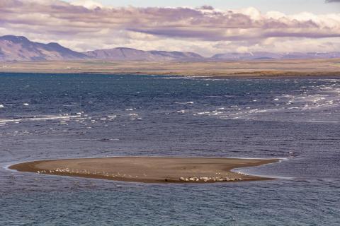 Die Seehunde Insel