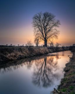Ein Baum, ein Fluss und ein Sonnenuntergang