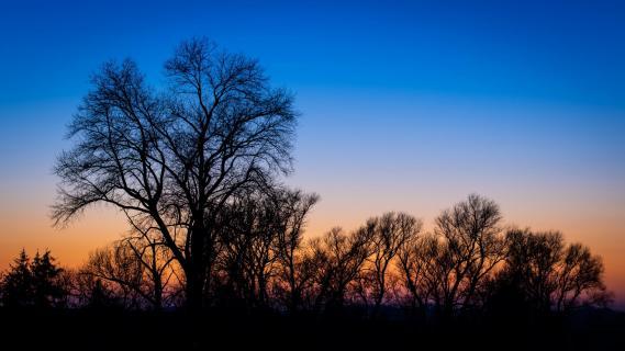 Baumschatten zur Blauen Stunde