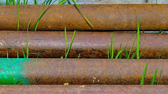 Gras findet immer seinen Weg