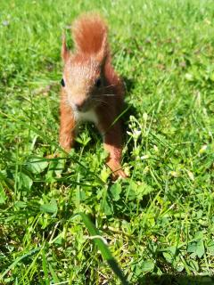 Kleiner Krümel im Gras