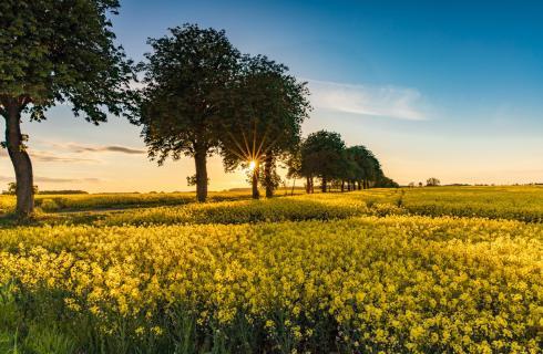 Sonnenuntergang im Dänischen Wohld