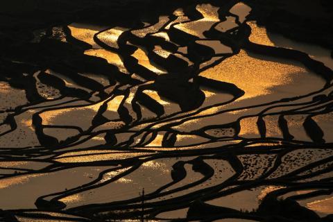 Reisterrassen im Sonnenaufgang