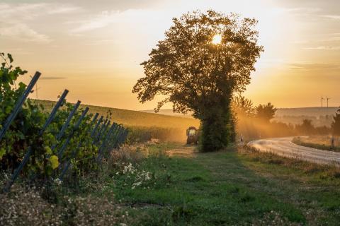 Traktor bei Sonnenaufgang