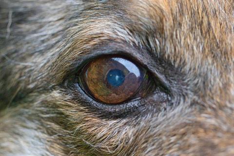 Hundeauge sei (auch mit 15) noch wachsam