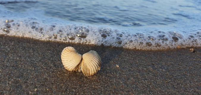 Zwei Muscheln tanzen mit dem Meer