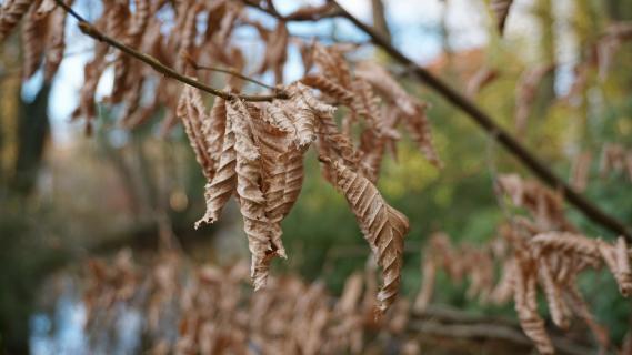 Andenken an den Herbst