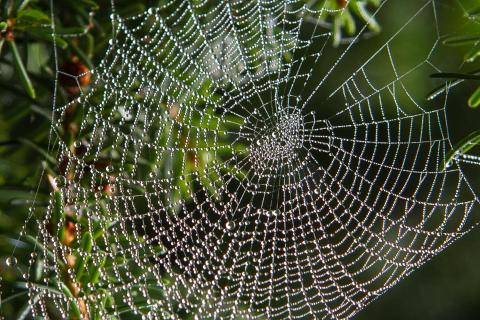 Netzwerk der Natur