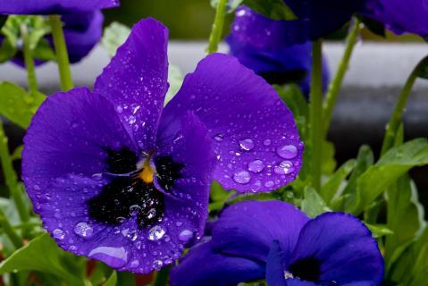 Blüte mit Wassertropfen