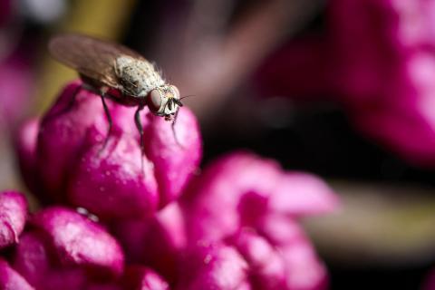 Fliege auf Farbe