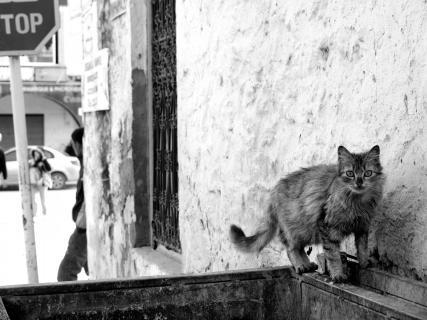 Straßenkatze in Nabeul