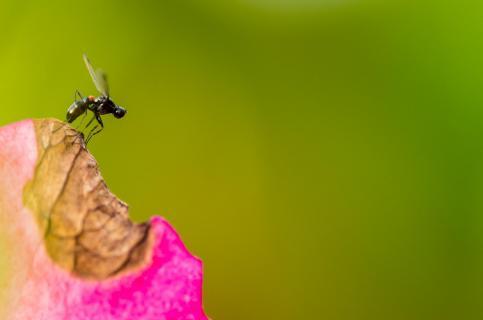 Abflug einer kleinen Fliege