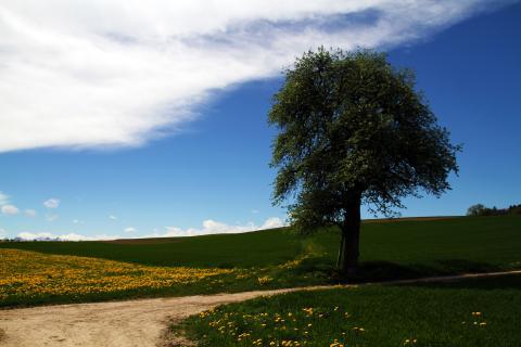 Baum am Wegesrand