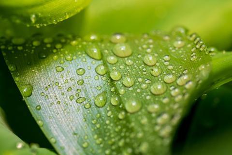 Wassertropfen auf Blatt