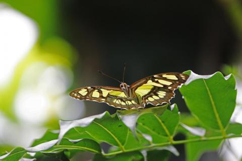 Schmetterling im Visier