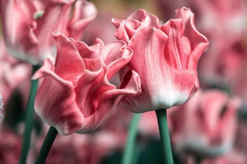 Luft und Licht sind die Liebhaber der Blumen