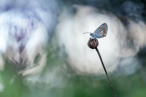 Schmetterling im Morgenlicht