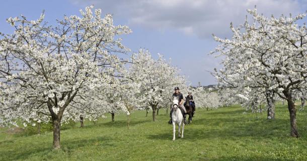 Ritt durch den Frühlingsgarten