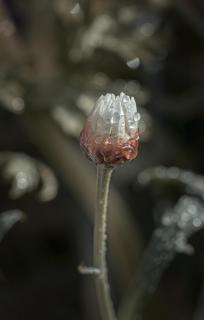 Tropfen auf Gänseblümchen