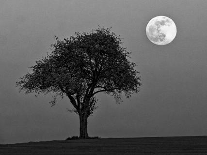 Tree at moonrise
