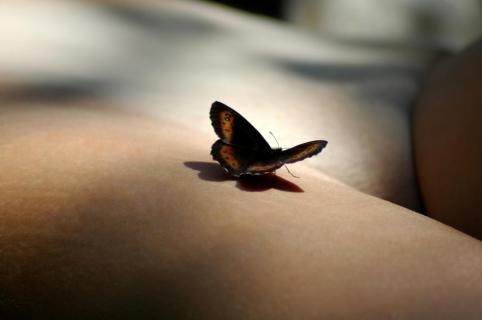 Schmetterling auf nackter Haut