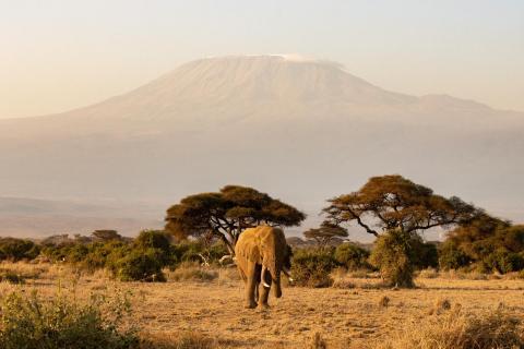 Elefant vorm Kilimanjaro