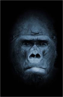 Gorilla[1]