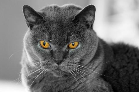 Katzenaugen