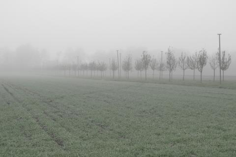 Nebelstimmung II