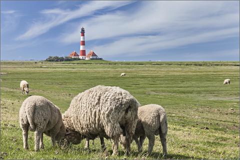 zufriedene Schafe!!!