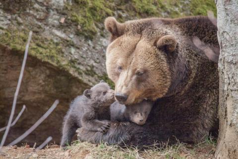 Mutter mit Nachwuchs