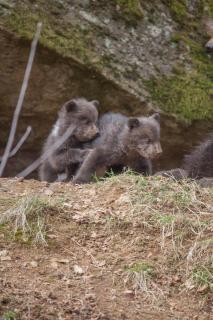 Bärenkinder