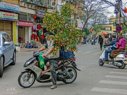 Orangenbaumtransport