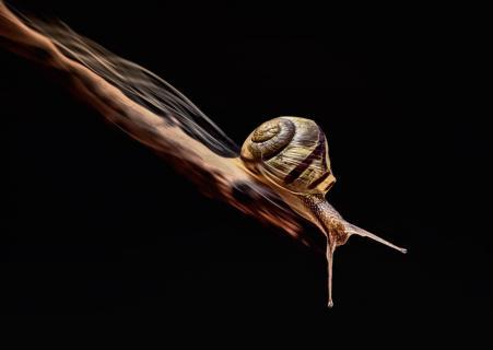 Run ´n´ jump snail