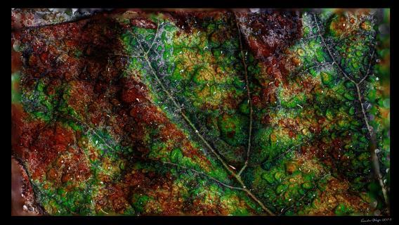 Colorfull Leaf HDR