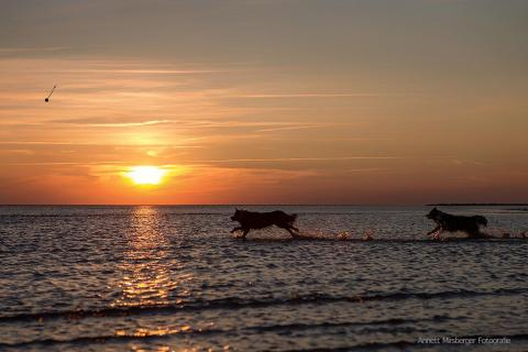 Wettrennen im Sonnenuntergang