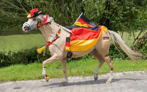 WM Pony