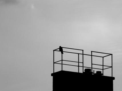 Low Angle View Of Silhouette Bird On Railing Against Sky