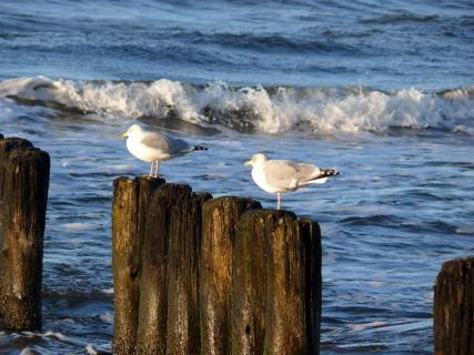 Close-Up Of Seagulls On Wooden Posts