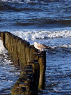 Seagull Perching On Post In Sea