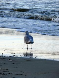Bird Perching On Shore
