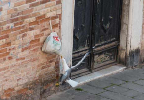 Venedig Müllentsorgung