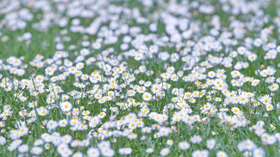 7 Fangen Sie den -Frühling-ein_Alfred_Nevsimal
