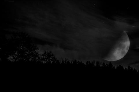 Mond im Wald