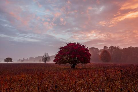 Ahorn im Herbst